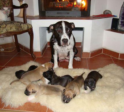 Ещё одна мама с малышами