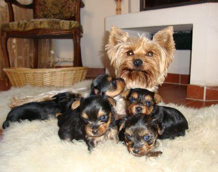 Счастливая мама и щенята