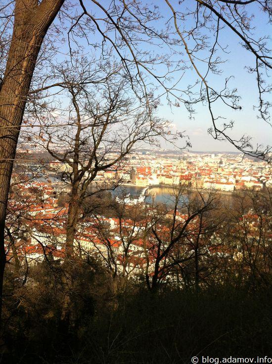 Сквозь ветки видна Влтава и Карлов мост