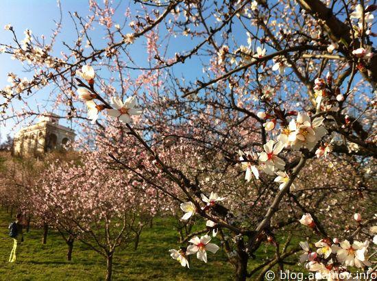 Над цветущими деревьями уже жужжат пчёлы